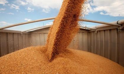 РЖД рассказала аграриям «страшилку» о том, что зерновозов на всех не хватит