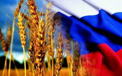 Смотрите в новом сезоне: Россия может и лидерство вернуть, и «пшеничный» мировой рекорд  побить
