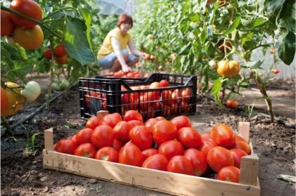 Вредитель экспортного значения: из-за мраморных клопов Россия закрыла границу для абхазских  овощей и фруктов