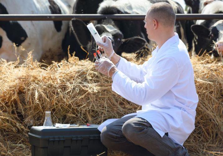 Россельхознадзор всерьез задумался о риске поступления опасных лекарств для животных на Родину