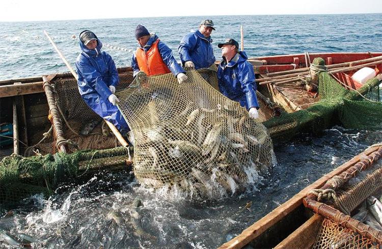 """В то время с наличностью в Мурманске была """"напряженка"""". За ремонт судового оборудования рассчитывались рыбой"""