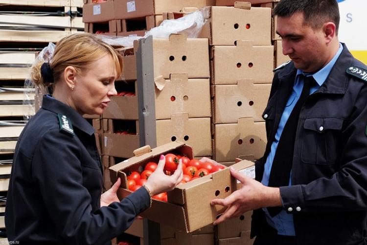 Россельхознадзор нерассматривает маленькие учреждения Турции для поставок вРФ плодоовощной продукции
