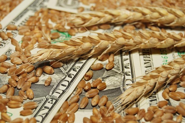 РФ в минувшем 2017г собрала рекордные 134 млн тонн зерна
