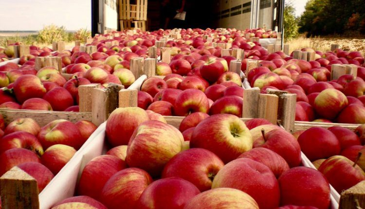 Молдавские яблочки хотят «пересекать» российскую границу бесплатно