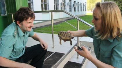 Пожилая черепаха не сдалась столичным таможенникам в руки