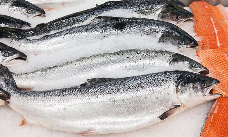 Российская Федерация обнулила ввозные пошлины наморскую рыбу
