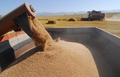 Зерновозы «закипели» от перегрузов и грозят приостановкой перевозок